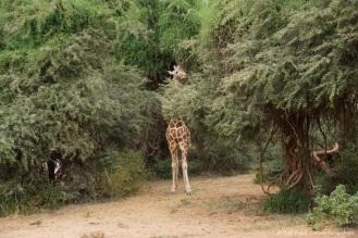 Samburu_1 (1)