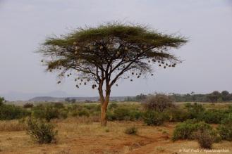 Samburu_1 (10)