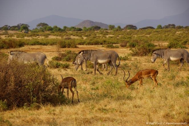 Samburu_1 (14)