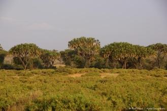 Samburu_1 (19)