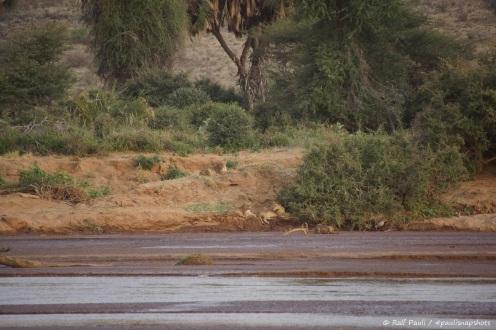 Samburu_1 (21)