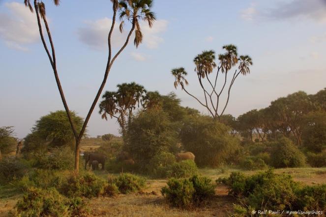 Samburu_1 (23)
