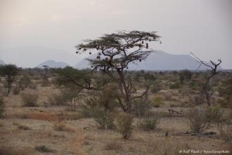Samburu_1 (29)