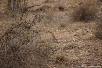 Samburu_1 (38)