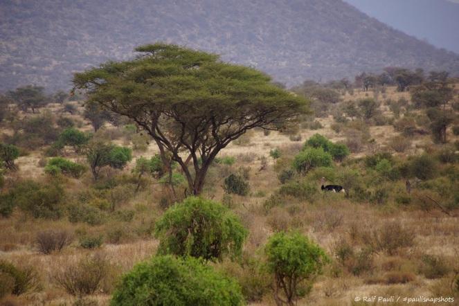 Samburu_1 (39)