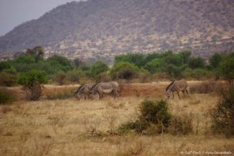 Samburu_1 (40)