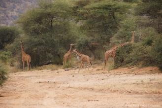 Samburu_1 (41)