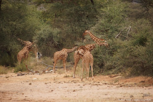 Samburu_1 (42)