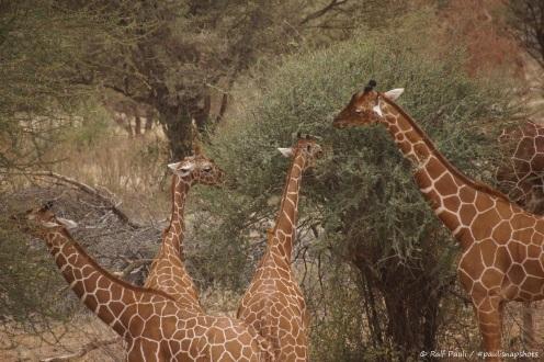 Samburu_1 (43)