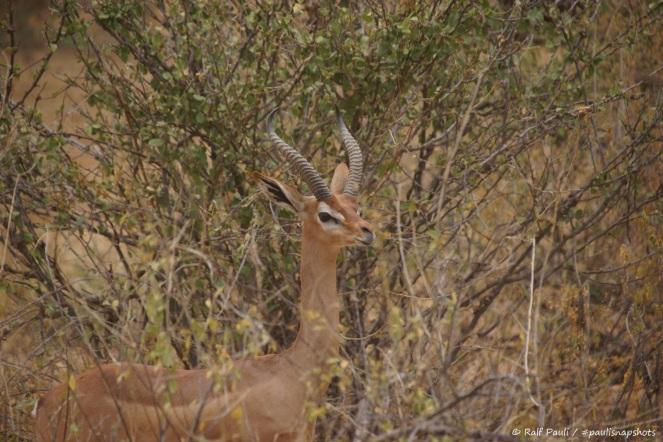 Samburu_1 (44)