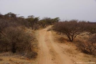 Samburu_1 (46)