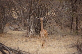 Samburu_1 (47)