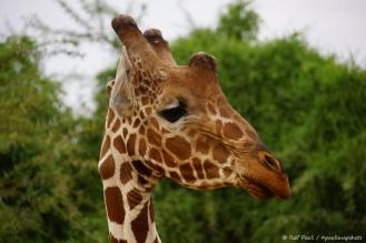 Samburu_1 (5)