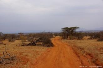 Samburu_1 (54)