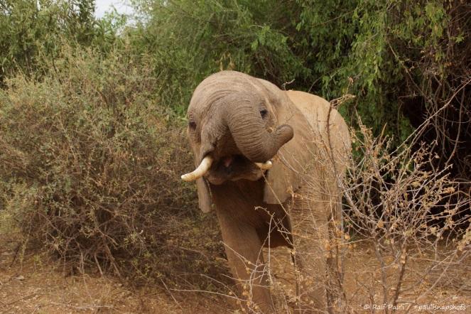Samburu_1 (58)