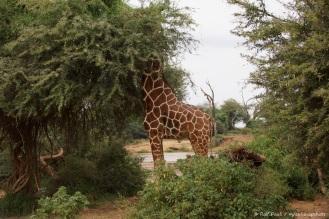 Samburu_1 (61)