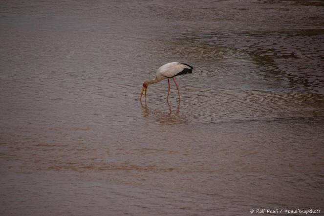 Samburu_1 (9)