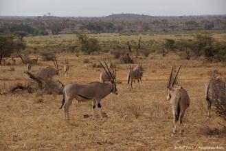 Samburu_2 (102)