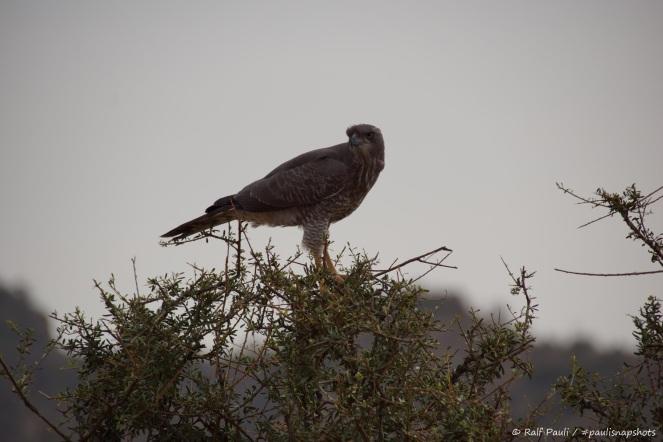 Samburu_2 (106)