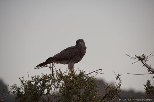 Samburu_2 (107)
