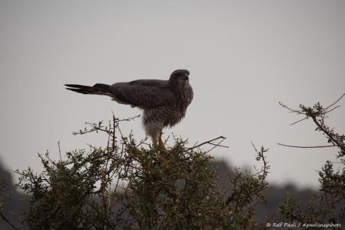 Samburu_2 (108)
