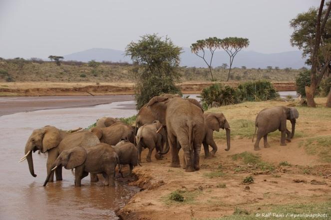 Samburu_2 (110)