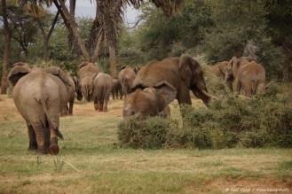 Samburu_2 (115)