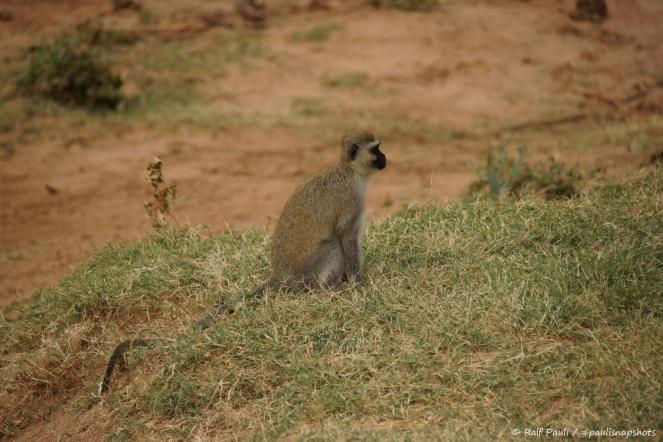 Samburu_2 (119)