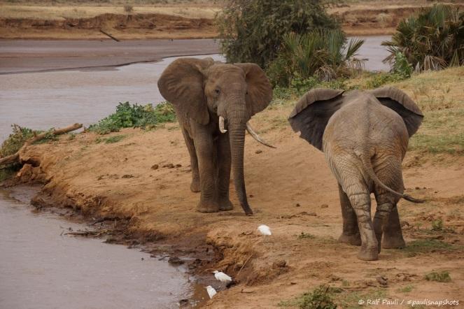 Samburu_2 (121)