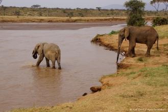 Samburu_2 (123)