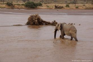 Samburu_2 (125)