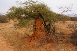 Samburu_2 (13)