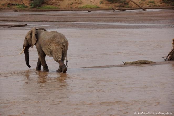 Samburu_2 (132)