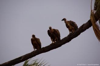 Samburu_2 (139)