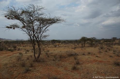 Samburu_2 (19)