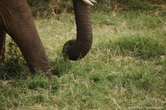Samburu_2 (2)
