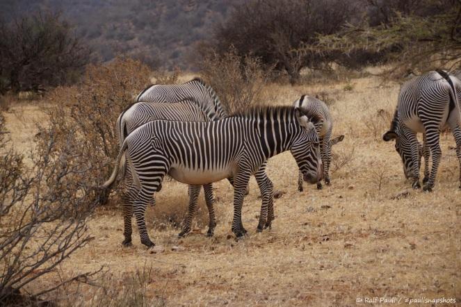 Samburu_2 (24)