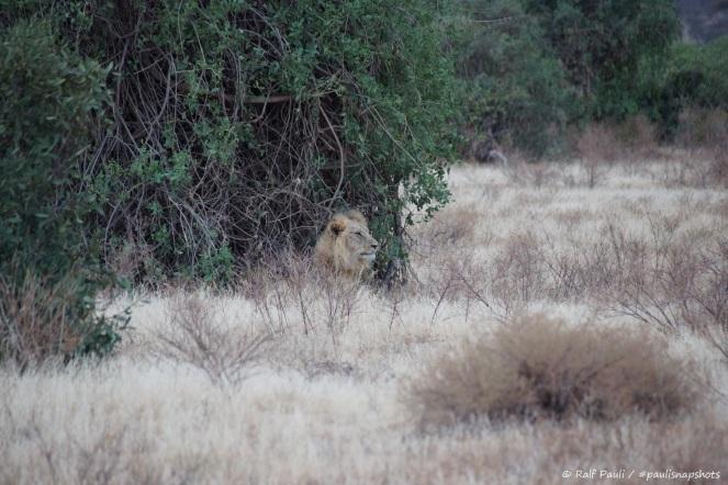 Samburu_2 (32)
