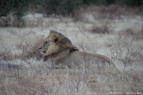 Samburu_2 (49)