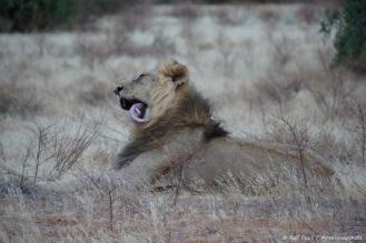 Samburu_2 (53)