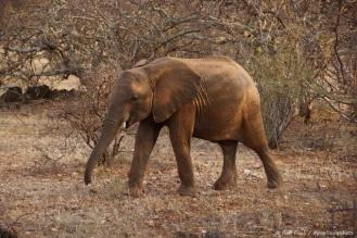 Samburu_2 (62)
