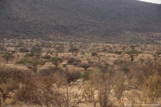 Samburu_2 (66)