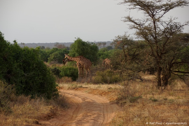 Samburu_2 (71)