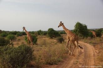 Samburu_2 (72)