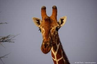 Samburu_2 (73)