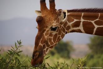 Samburu_2 (74)