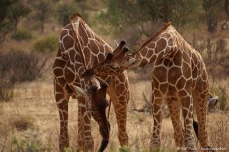 Samburu_2 (75)
