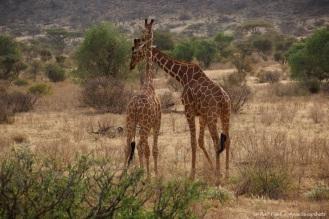 Samburu_2 (78)