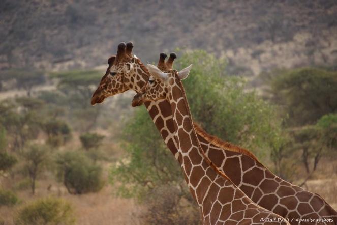 Samburu_2 (79)