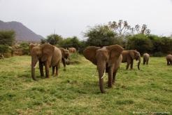 Samburu_2 (8)